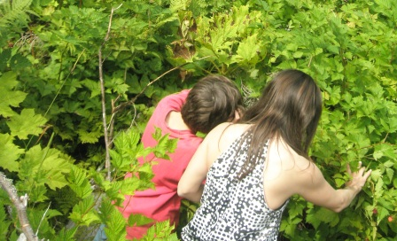 Berry picking during our Adventure Kart tour, a family friendly attractions