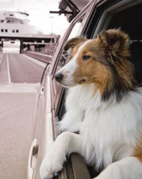 It is no problem traveling the Alaska Ferries with pets