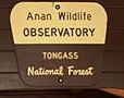 Anan Wildlife Observatory, the perfect place for Bear Viewing in Alaska