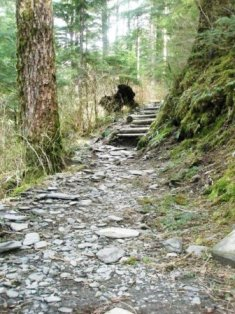Just some of the stairs you'll encounter on the Deer Mountain trail in Ketchikan Alaska.