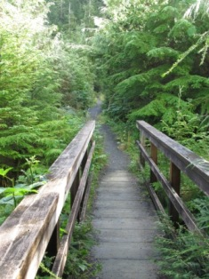 Lush temperate rainforest canopy on the Deer Mountain trail in Ketchikan Alaska.