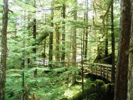 Hiking in Ketchikan's rainforest - the Tongass National Forest