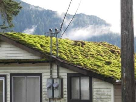 Ketchikan Real Estate damage due to moss
