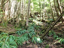 Amazing rainforest views on the Rainbird Trail in Ketchikan