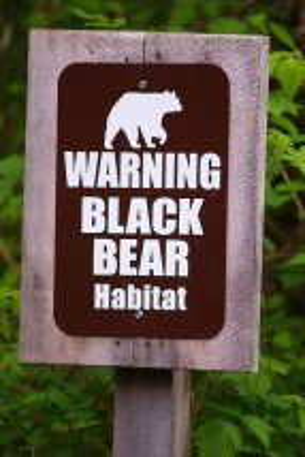 Black Bear Habitat at Neets Bay Bear Viewing in Alaska