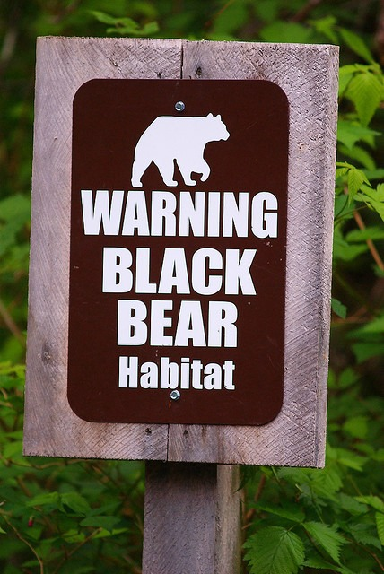 Black Bear Habitat at Neets Bay Bear Viewing in Alaska
