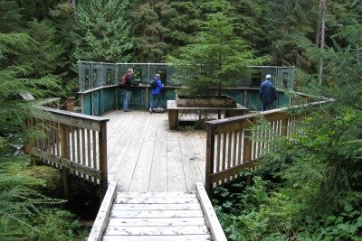 The observation platform at Traitors Cove for bear viewing in Alaska